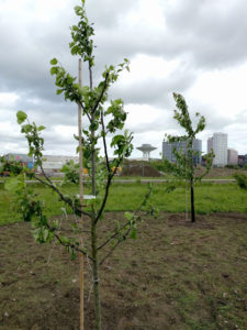 Trees of 40 fruit planted