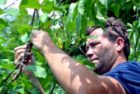 Tree of 40 Fruit grafting workshops