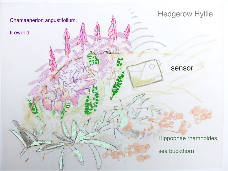 update on Hedgerow Hyllie