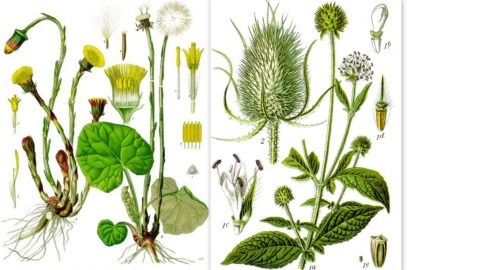 Wild Edible Plants at Agrikultura