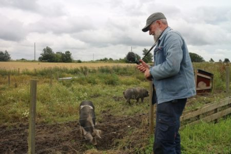 News for Pigs and Man